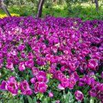 Iranian Garden75