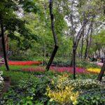 Iranian Garden76