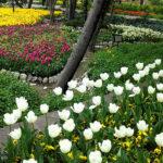 Iranian Garden78