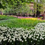 Iranian Garden79