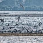 Migratory Bird (10)