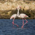 Migratory Bird (11)
