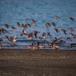 Migratory Bird (12)