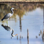 Migratory Bird (13)