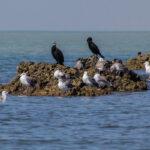Migratory Bird (2)