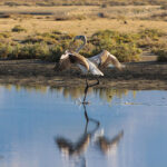 Migratory Bird (3)