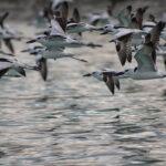 Migratory Bird (8)