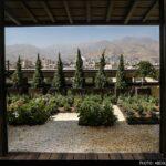 Roof-Garden-9
