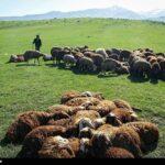 Spring in Ardabil3