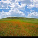 Spring in Ardabil5