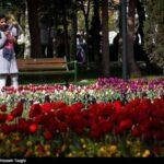 Tulips Festival (3)