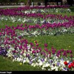 Tulips Festival (4)