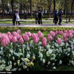 Tulips Festival (6)