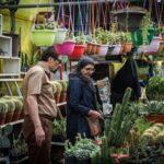 flower garden-6-