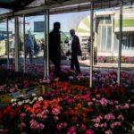 flower garden_1111