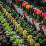 flower garden_5400-2