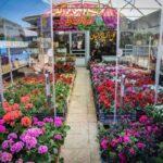 flower garden_5435