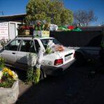 flower garden_6622-2