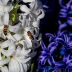 flower garden_6661