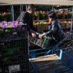 flower garden_6678
