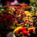 flower garden_6707