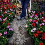 flower garden_6749-2