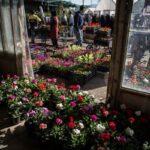 flower garden_6781