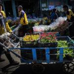 flower garden_7181