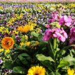 flowers_2996