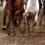 horse races_7246-1