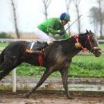 horse races_7289-[50-]