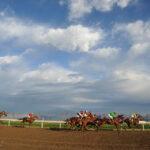 horse races_7702-[50-]