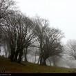 Fog in Rasht-Iran