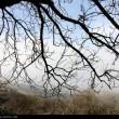 Fog in Rasht-Iran2