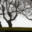 Fog in Rasht-Iran4