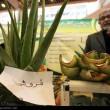 Organic food exhibition in Tehran 37