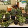 Organic food exhibition in Tehran 4