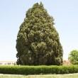 Trees in Iran-02