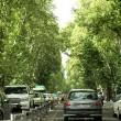 Trees in Iran