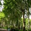 Trees in Iran02
