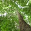 Trees in Iran04
