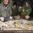 Persian leopard-Borzoo-4