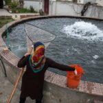 Domestic fish farming (16)