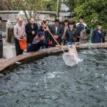 Domestic fish farming (23)