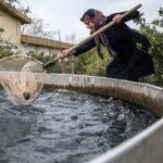 Domestic fish farming (39)