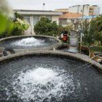 Domestic fish farming (4)
