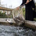 Domestic fish farming 44)