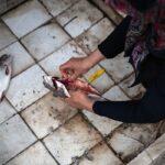 Domestic fish farming (54)