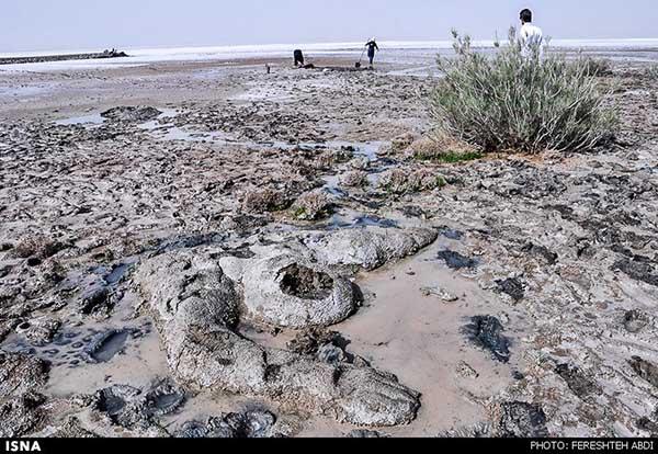 Kaji Namakzar Wetlands_103
