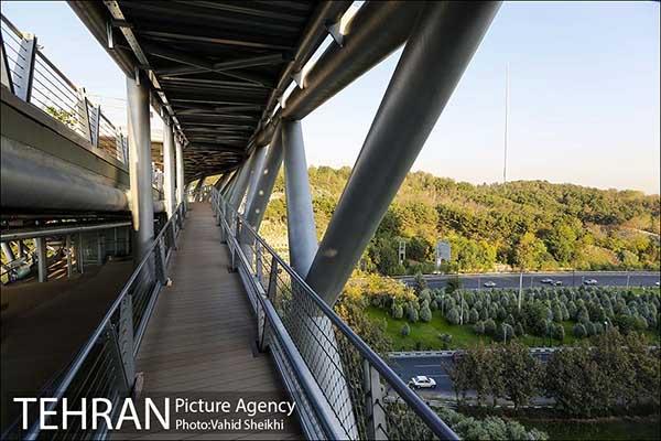 Nature Pedestrian Bridge-4